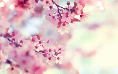 108 Salutations au soleil : équinoxe de printemps